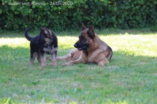 Rayno et Orore
