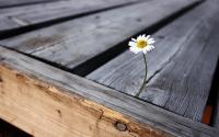 Como superar as dificuldades