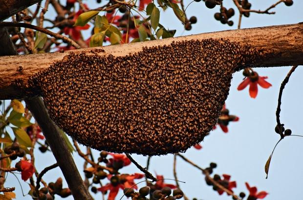 Essaim d'abeilles chez vous, ne paniquez pas !