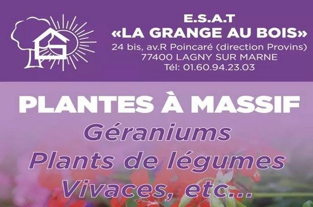 Lagny sur Marne ► Vente de plantes à massif à l'ESAT «La Grange au Bois»