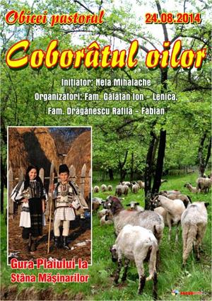 coboratul oilor de la munte