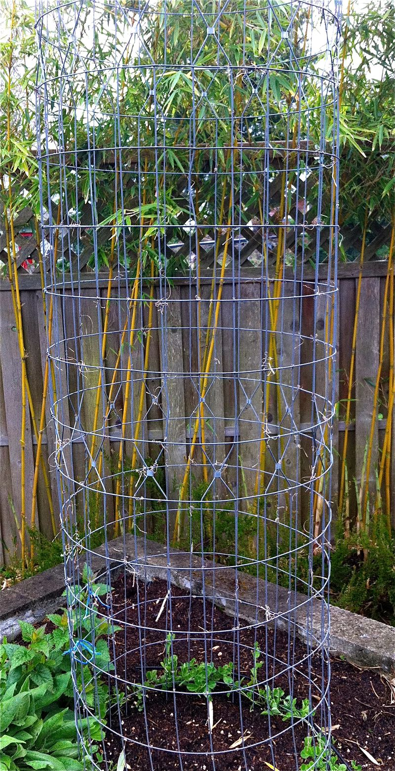 Plant Talk Metal Garden Cages  Branches as Art Objects