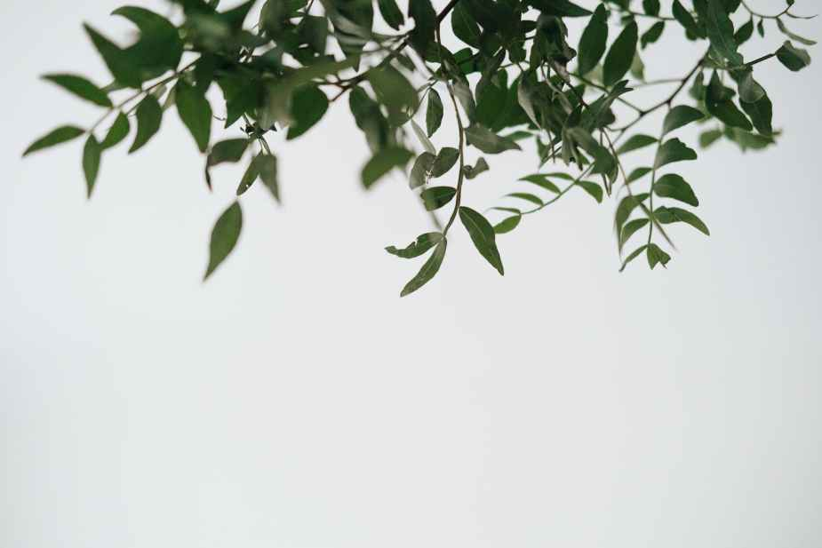 green plant branch with thin stems on white background