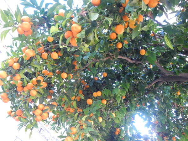 Neighborhood Oranges