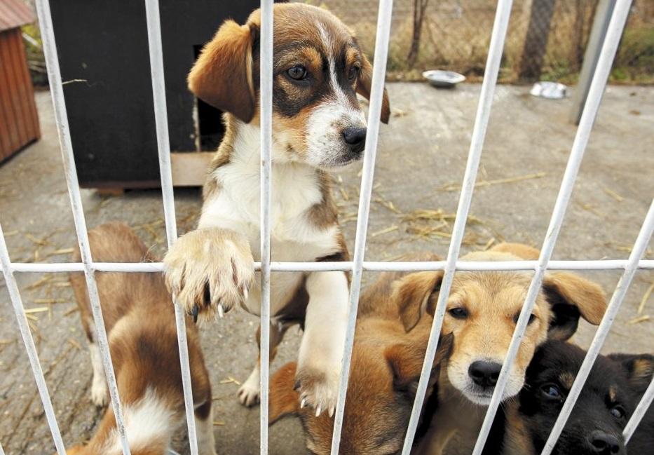 Valencia lanza una campaña para fomentar la adopción de animales abandonados