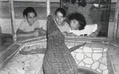 La historia del cocodrilo de Casa Fos