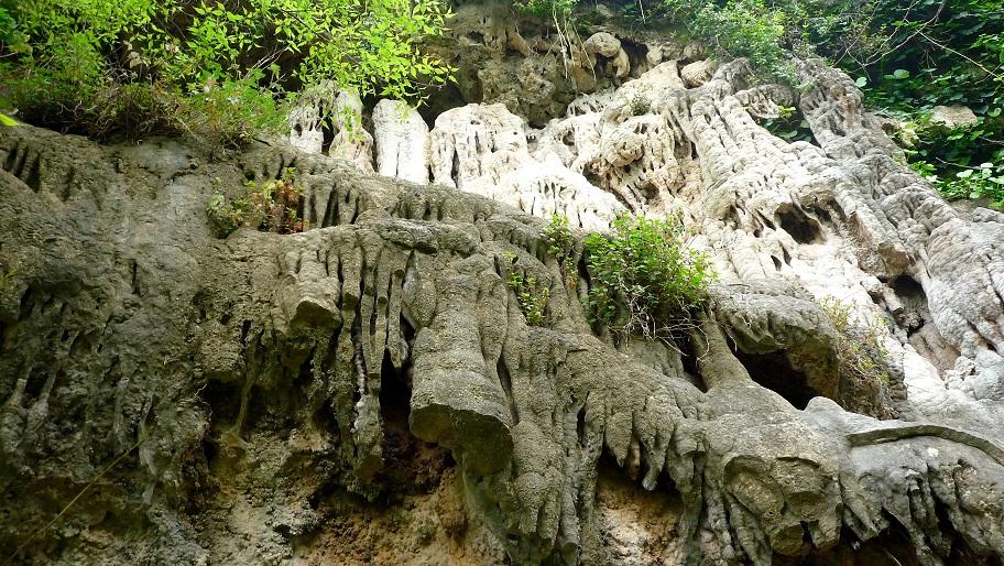 La Cabrentà de Estubeny: uno de los pocos ejemplares de selva mediterránea