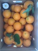 Caja de naranjas del carmen