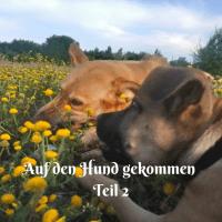 Auf den Hund gekommen - Teil 2