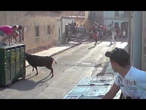 Un toro en una calle de la pedanía de Benifaraig en una edición pasada