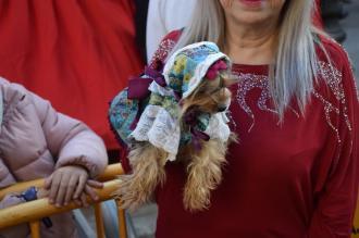 bendición de la fiesta de san Antonio Abad en València 20200117_094858 (90)