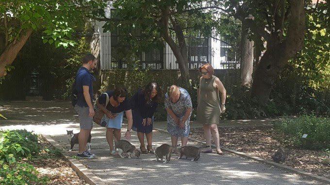0512 Pinso colònies felines (gatos)