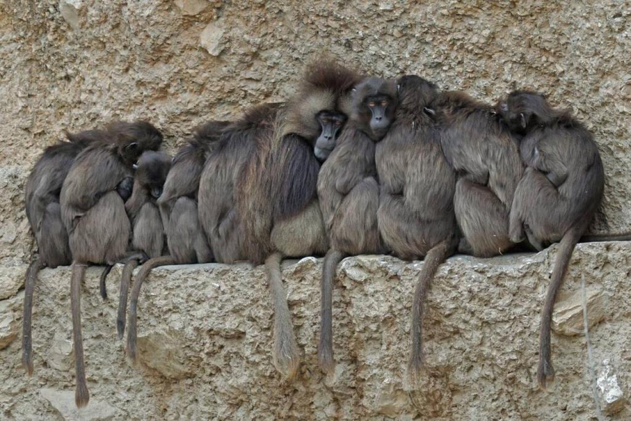 El-aislamiento-social-afecta-al-bienestar-de-humanos-y-de-otros-maniferos