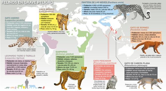 Mapa-felinos_671 (1)