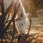 Horses & Ponies in New Forest