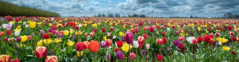 cropped-campo-di-fiori1.jpg