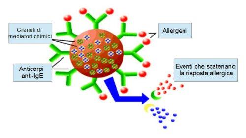 Risposta allergica IgE