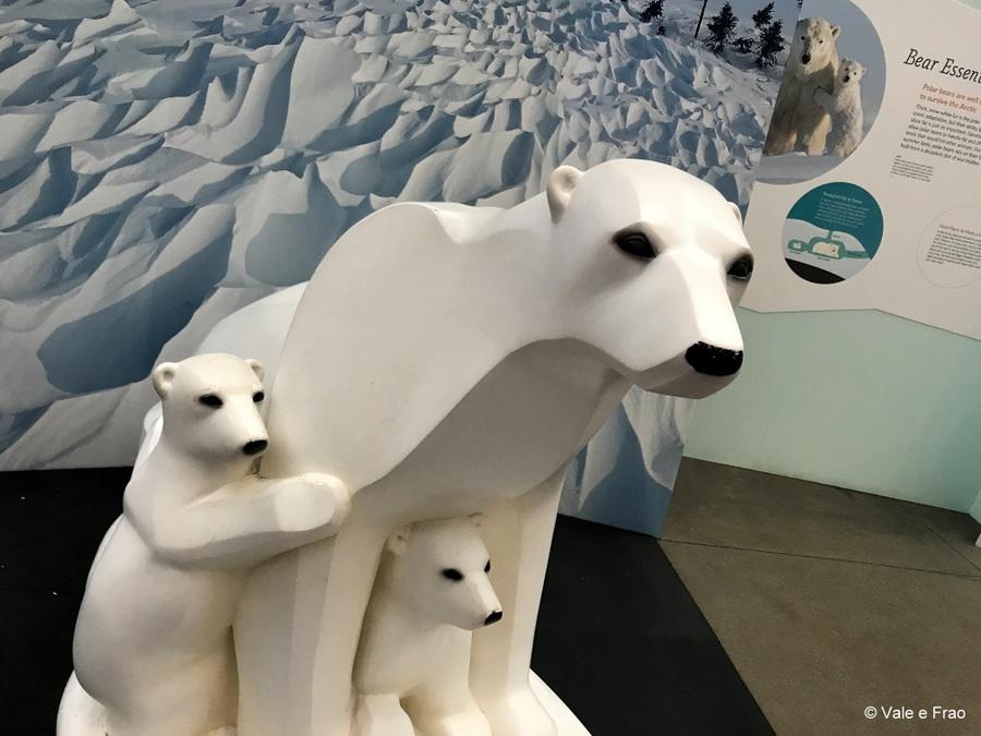 Visitare l' Accademia della Scienza a San Francisco in California scienza e animali