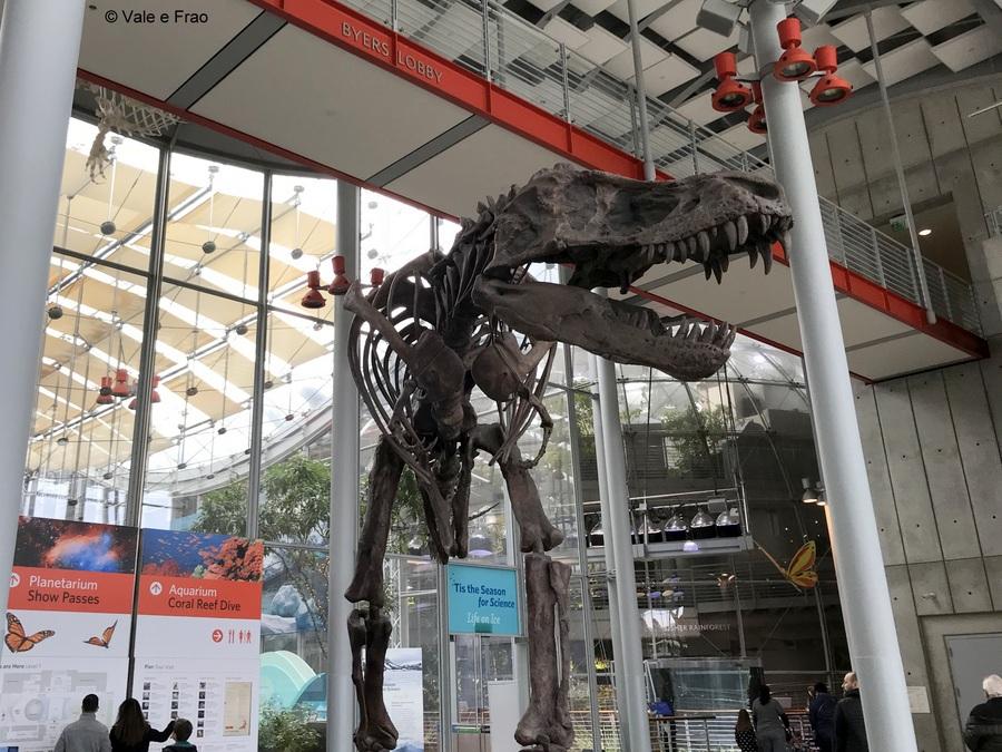 Visitare l' Accademia della Scienza a San Francisco in California scheletri preistorici