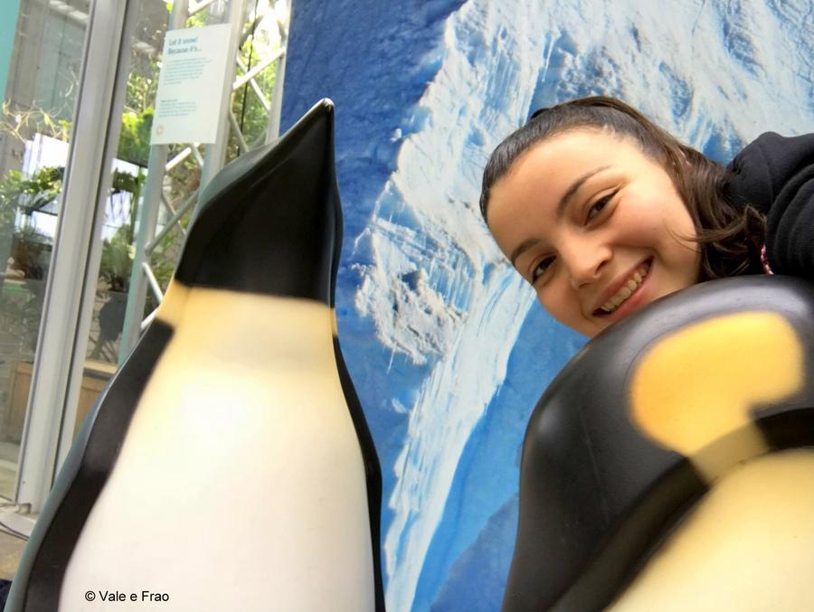 Visitare l' Accademia della Scienza a San Francisco in California laboratori animali