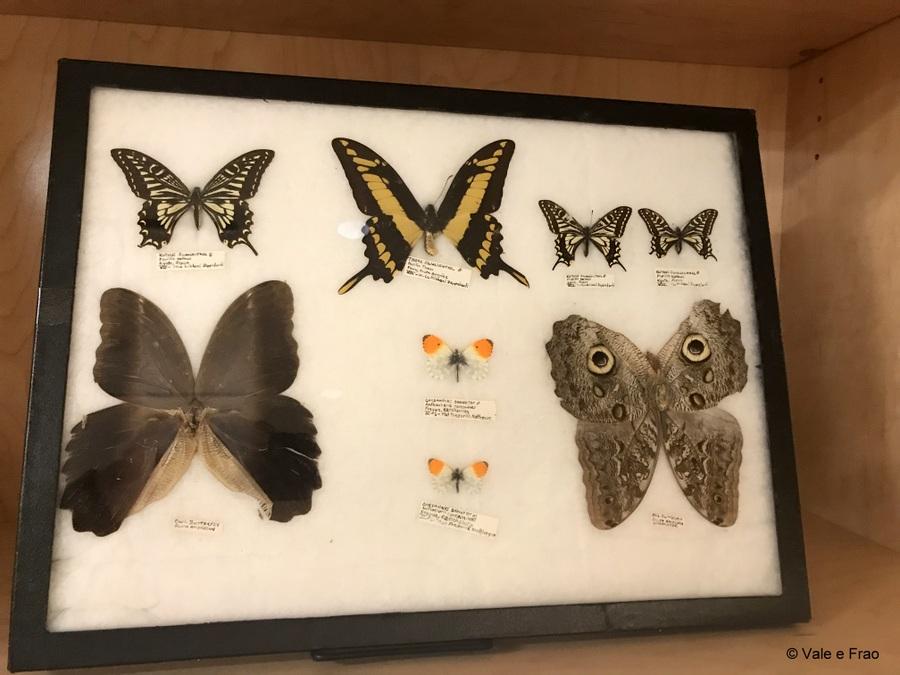 Visitare l' Accademia della Scienza a San Francisco in California scheletri farfalle tipi