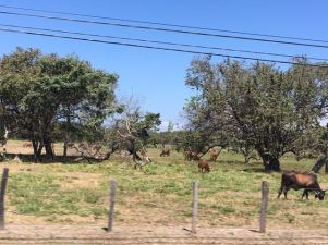 Driving all over Costa Rica is fun.. lots of farms and houses to check out.