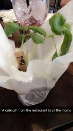 Cute gift for all the moms...basil!