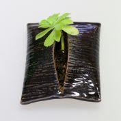 Plantes enveloppées émail brillant