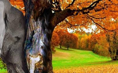 Ensemble pour les arbres