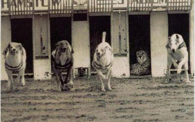 Une course entre chiens et guépard : est-ce bien utile ?