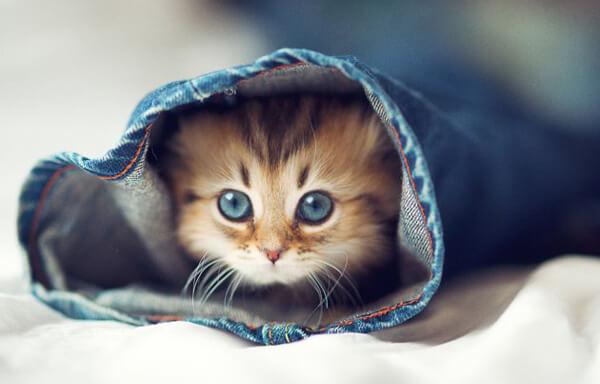 kitten care advice vale