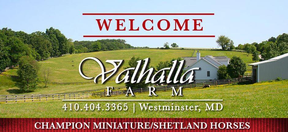 Valhalla Farm Breeder Champion Miniature Shetland Horses Maryland