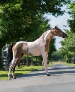 piper mare mini horse miniature