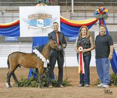 justified-an-mini-stallion-champion-breeder-1