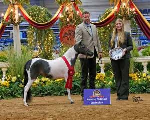 piper champion show mini horse breeder Mare