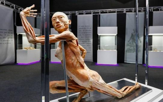 Maravilhas do Corpo Humano - Nova exposição no Iguatemi Campinas