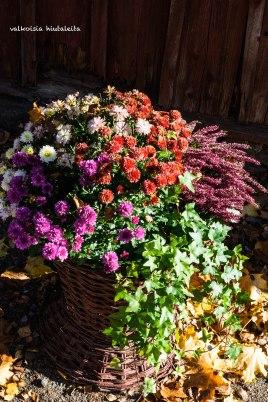 Syksyn kukat