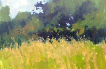 Grassy meadow Park Pit