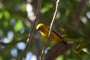 Aves/Birds