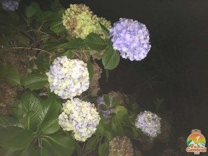 Nature (56)