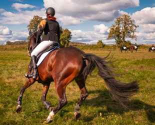 person leather jacket riding brown horse