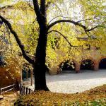 Estate di San Martino – 10 novembre
