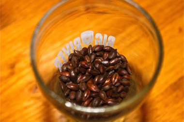 Craft brewers have a variety of options for ingredients, like cocoa beans, when creating the beer. (VBR)