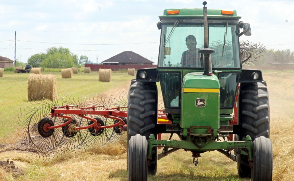 A worker rakes hay into rows where it will dry for several days before it is baled. (VBR)
