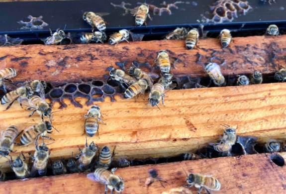 Busy bees work at Lozar Apiaries in Edinburg.