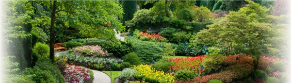 full service landscaping lawncare