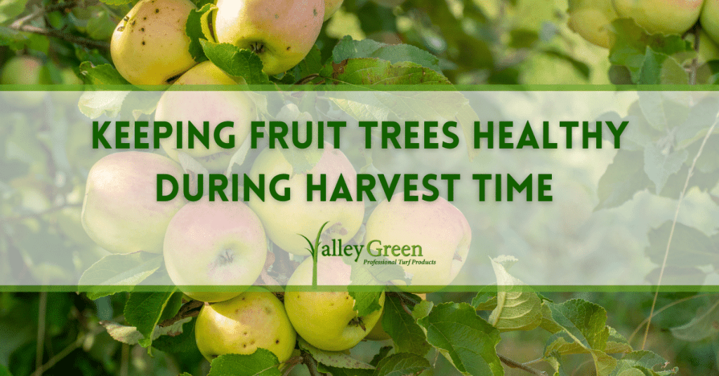 Keeping Fruit Trees Healthy during harvest time