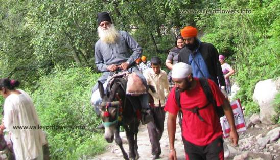 Govindghat to Ghangaria by Pony.