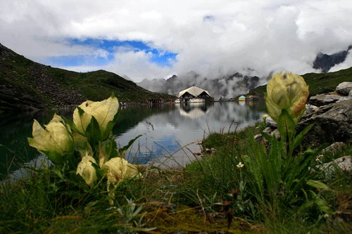 Hemkund Sahib in August you can see Brahamkamal flowers