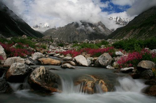 Pushpawati river deep in the valley of flowers